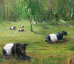 Cows Resting 11x14
