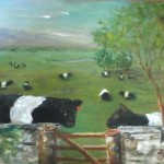 Belted Galloway cows by  fence 9X12