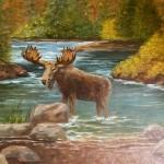 Maine Moose 12x16